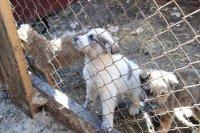 Писательница Анна Арбатская открыла в Кызыле приют для собак