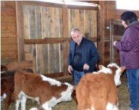 Харон Амерханов: Тувинская короткожирнохвостая овца – это «бриллиант» в овцеводстве