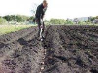 17-18 мая кызылчан приглашают на посадку картофеля