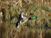 Проведено обследование озер Убсу-Нур, Амдайгын и Алдын-Хол на предмет птичьего гриппа
