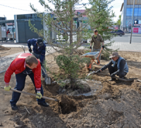В центральном сквере Кызыла появились голубые ели