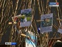 Россельхознадзор предупреждает дачников Тувы быть внимательными при покупке саженцев