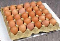 """Россельхознадзор """"задержал"""" на границе в Туве более 4000 куриных яиц, ввозимых в Монголию"""