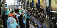 В Туве выстраивается сеть предприятий по приему и переработке молока