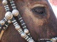 В Туве сохраняют тувинскую породу лошадей