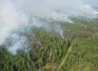 В Туве действует 11 лесных пожаров