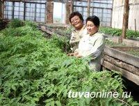 Ботанический сад ТувГУ начинает реализацию овощной и цветочной рассады