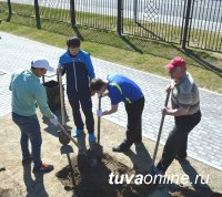 В Кызыле нынешней весной посажено почти 500 деревьев