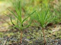 Экологи Тувы предложат детям послушать в 7 ч утра пение птиц, научиться садить деревья