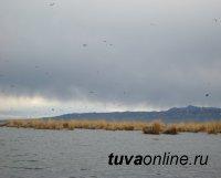 Проведено эпизоотическое обследование озера Убсу-Нур (Тува-Монголия)
