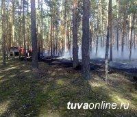В Туве локализован один лесной действующий пожар