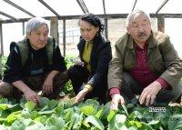 Сладкая ягода арбуз - от овощеводов Кара-Хаака