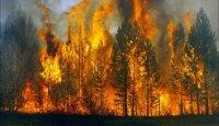 Жаркая до +37 погода в Туве и грозы провоцируют новые лесные пожары