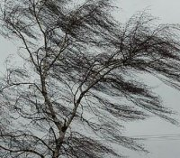 В Туве ожидается сильный ветер