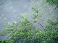 9 июля ожидаются сильные дожди