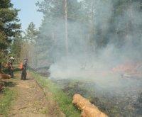 В Туве +40. Действуют 16 лесных пожаров