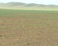 Глава Тувы поставил задачу помочь хозяйствам, пострадавшим от засухи