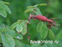В год народных традиций Минздрав Тувы выступает за активное возобновление и развитие традиций заготовки целебных трав