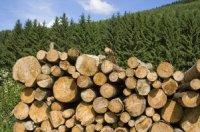 Глава Тувы поручил проанализировать реализацию программы выделения льготной древесины для строительства жилья