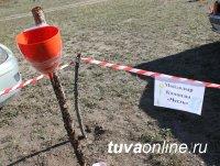 Более 300 студентов Тувинского госуниверситета приняли участие в акции по санитарной очистке Енисея