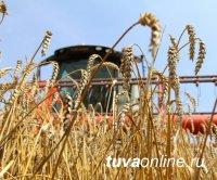В Туве подводят предварительные итоги уборки сельхозкультур