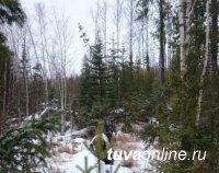 В Туве найден заблудившийся в лесу 15-летний сборщик кедровых орехов