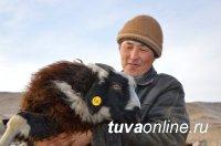 Кызыл готов к проведению сельхозпереписи
