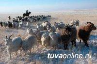 Минсельхозпрод Тувы держит на контроле зимовку скота