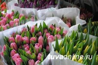Мэрия Кызыла определила места цветочной ярмарки