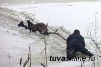 В Тоджинском кожууне Тувы спасен мужчина, упавший в проталину реки  Б.Енисей