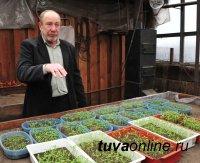 Александр Желтухин: С организованным поливом жаркое лето Тувы фермеру - друг, нежели враг