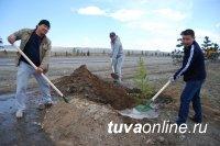 На Аллее поколений в Кызыле появились 105 молодых вязов