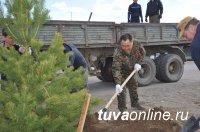 Глава Тувы помог с озеленением новостроек в поселке Каа-Хем