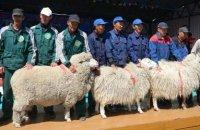 Тувинские животноводы представят своих овец и коз на Сибирско-Дальневосточной выставке