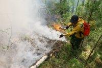 Премьер Шолбан Кара-оол призвал земляков быть максимально осторожными с огнем и воздержаться от выхода в лес