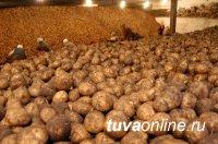 Крупное овощехранилище откроется в селе Хайыракан Дзун-Хемчикского района Тувы