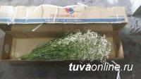 Декоративная зелень с трипсом из Израиля уничтожена