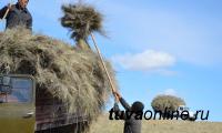 В Туве продолжается массовая заготовка кормов