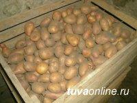 Россельхознадзор: Что необходимо знать при хранении картофеля зимой