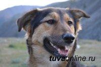В Туве 8 октября пройдет традиционная выставка собак охотничьих пород