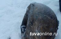 Обломок «Прогресса» найден во дворе жилого дома в Туве