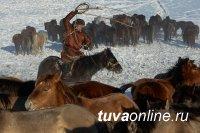 В 2017 году в Туве создадут племенной репродуктор по разведению лошадей тувинской породы