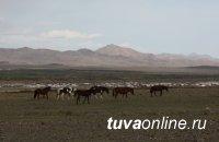 Не допустить трансграничного заноса заболеваний животных в Туву