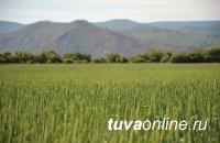 Общая стоимость сельхозугодий Тувы после переоценки увеличилась в 1,4 раза