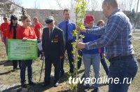 Легендарный «Тополь Победы» из Сталинграда пустил корни на тувинской земле