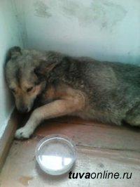 В Кызыле создано Общество защиты животных «Хатико»