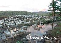Глава Тувы обязал Минсельхозпрод РТ контролировать доведение средств господдержки до фермеров и эффективность их использования