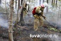 В Туве установлен виновник лесного пожара