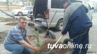 Департамент горхозяйства Мэрии Кызыла собирает до 18 мая заявки от УК на завоз земли для цветников и газонов во дворах