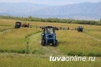 В Туве кожуун-лидер кормозаготовительной кампании в сентябре получит трактор